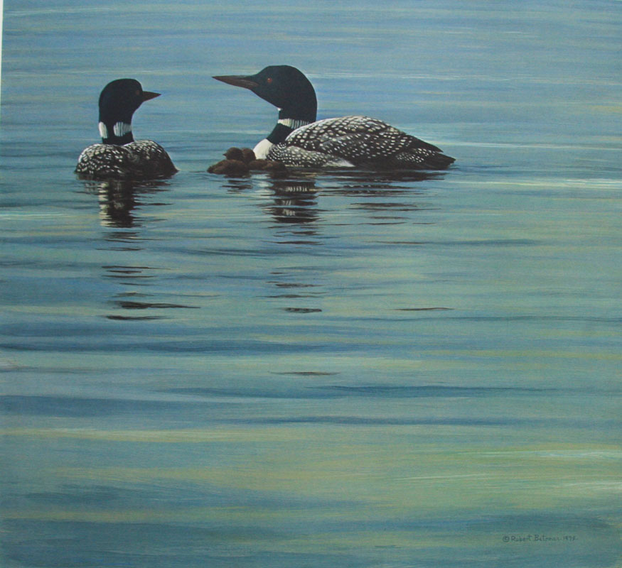Loon Family by Robert Bateman